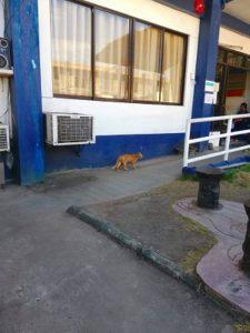 ドゥマゲテ 猫
