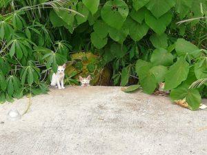 フィリピン 野良猫