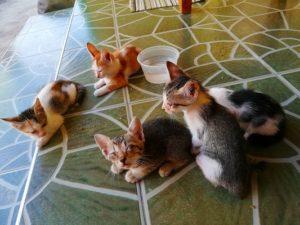 フィリピン 保護猫