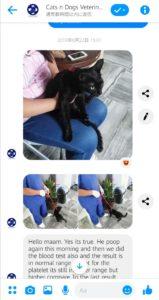 フィリピン 動物病院 対応
