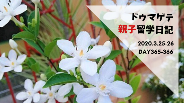 ドゥマゲテ親子留学日記