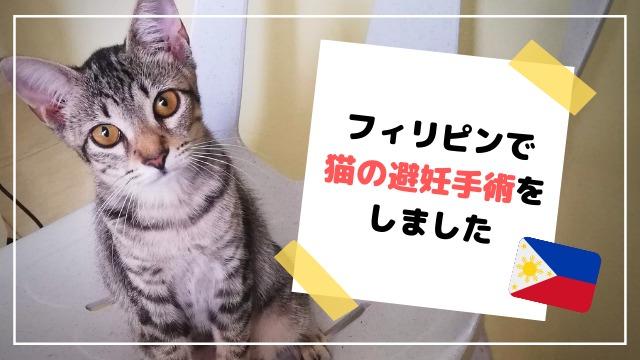 フィリピン 猫 避妊手術