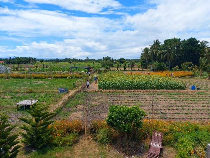 ドゥマゲテのおでかけスポットReef's farm